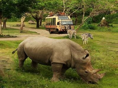 Paket Bali Petualangan Tour | Petualangan Bali Safari dan Marine Park