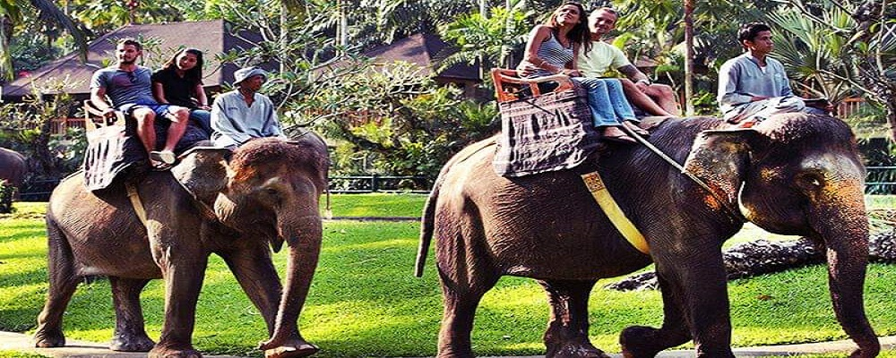Paket Bali Petualangan Tour | Wisata Elephant Ride