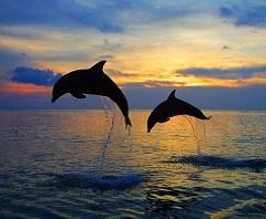 Paket Tour di Bali | Wisata ke Lovina (Dolphin)