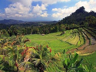 Bali Satu Hari ke Besakih   Sawah Bukit Jambul