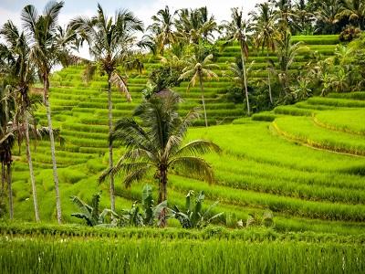 Bali Satu Hari ke Bedugul dan Tanah Lot | Sawah Jatiluwih