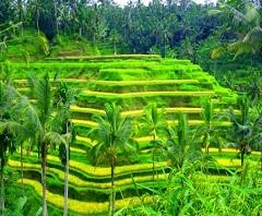 Paket Tour di Bali | Paket Bali Satu Hari Tour