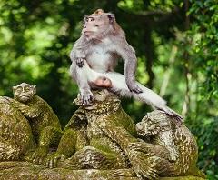 Bali Satu Hari ke Ubud